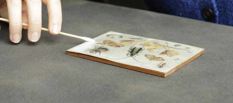 "Hamilton Kerr Institute student Anna Don undertaking treatment of Jan van Kessel's ""Insects""."