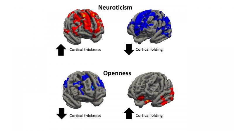 Personality Traits Linked To Differences In Brain Structure