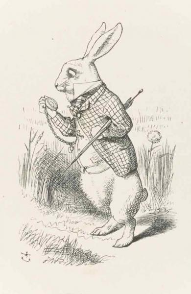 Rabbit illustrations drawings
