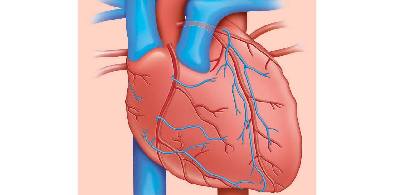 New drug could protect from tissue damage following heart attack ...