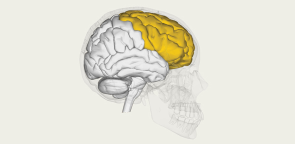 Education and the brain: what happens when children learn? - University of Cambridge