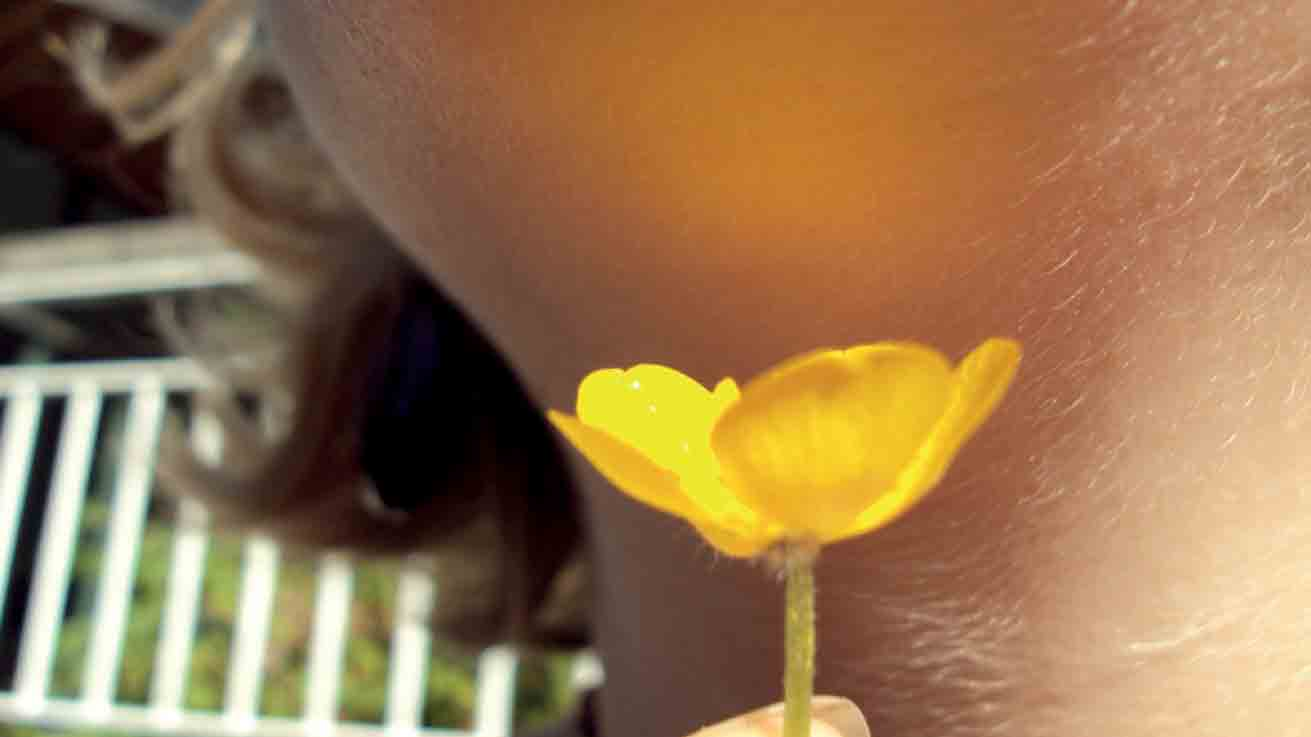 Why Buttercups Reflect Yellow On Chins University Of