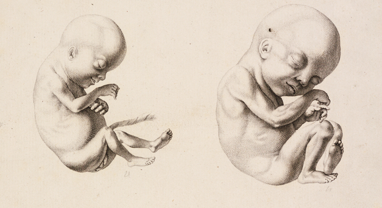 Reproduction, from Hippocrates to IVF - University of Cambridge