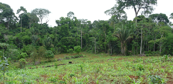 One of the largest area studies of forest loss impacting biodiversity shows that a third of the Amazon is headed toward or has just past a threshold of forest cover below which species loss is faster and more damaging. Researchers call for conservati...