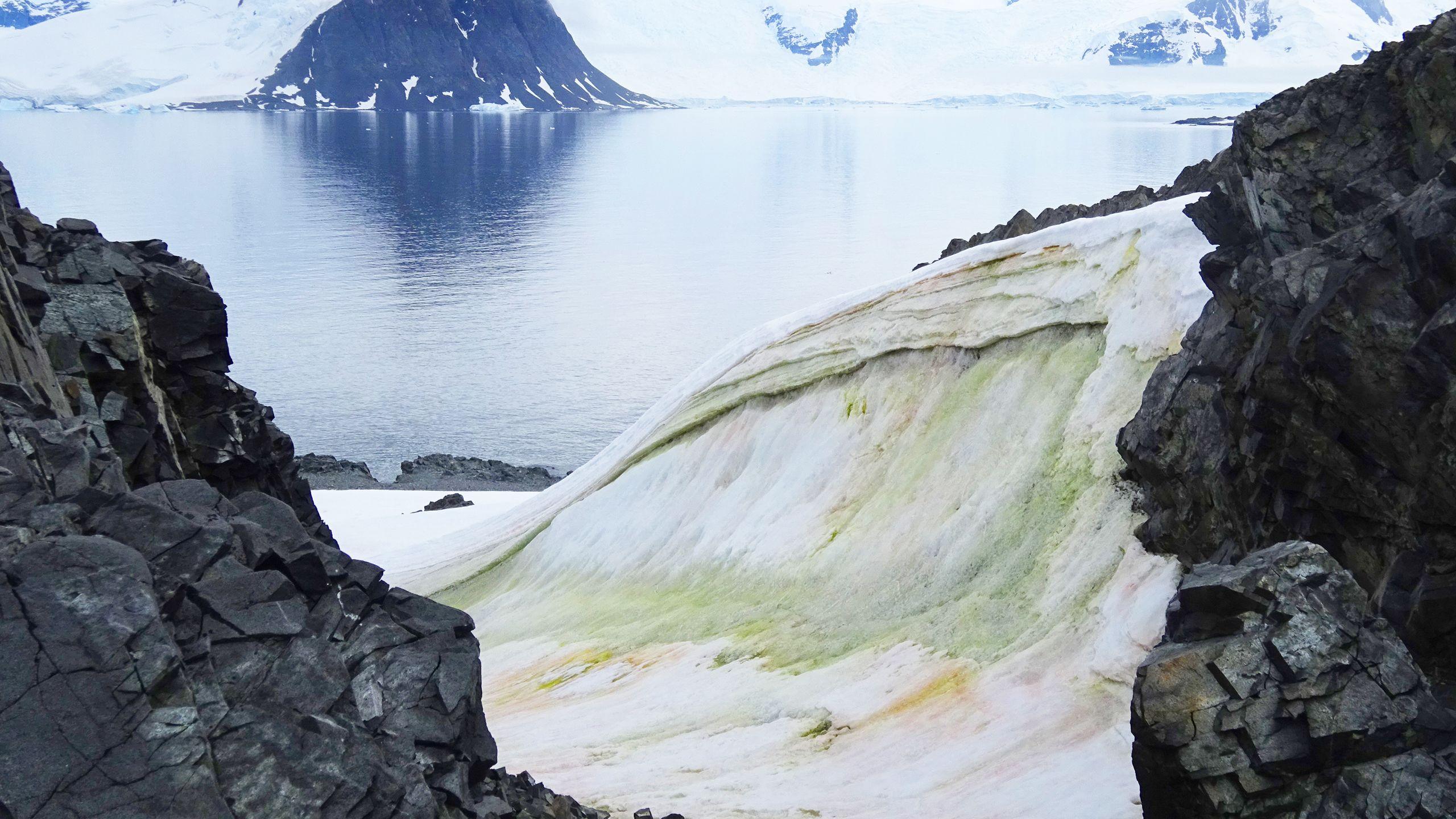 Alghe colorate della neve sull'isola di Anchorage, Antartide. Credito Matt Davey