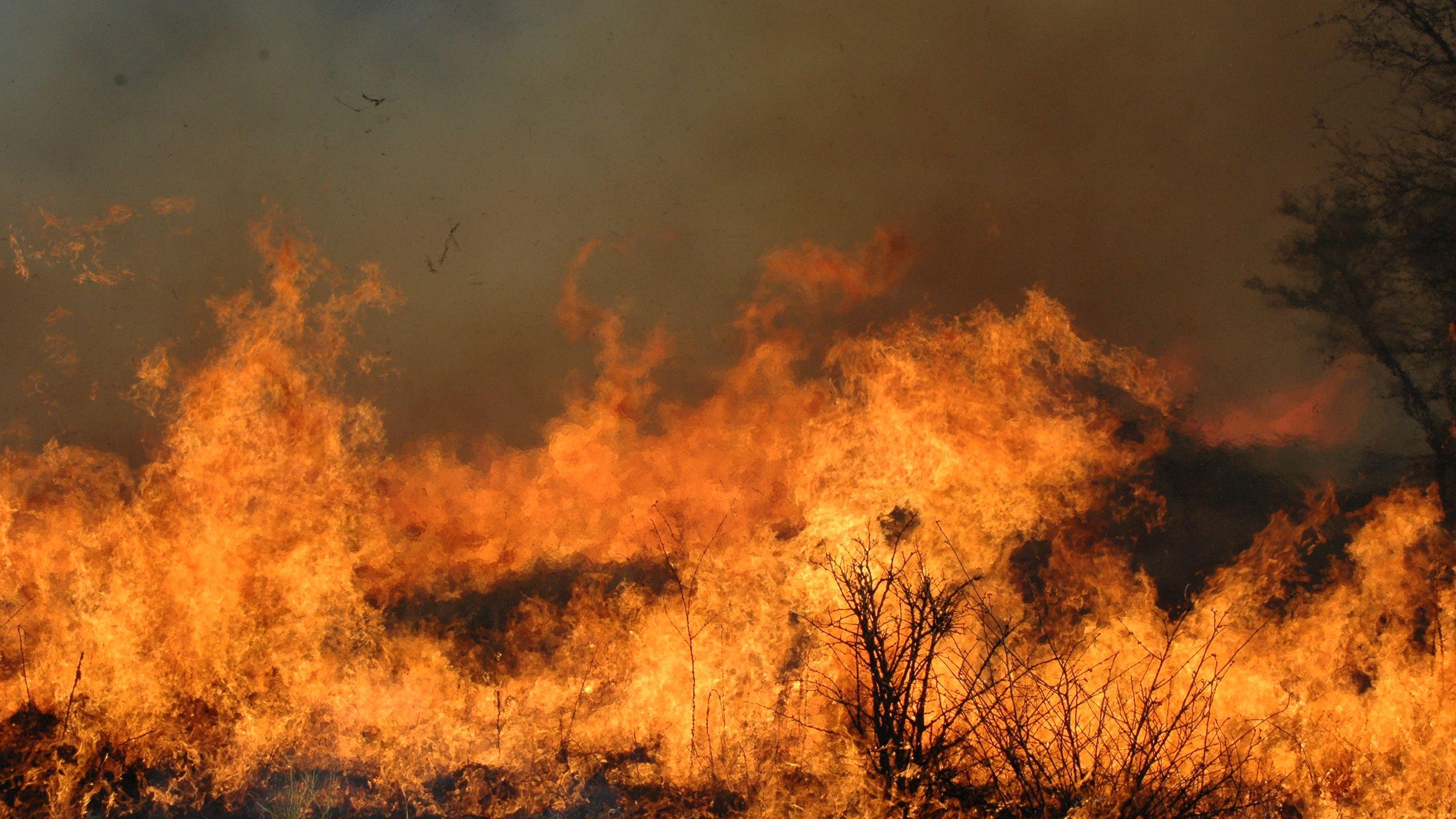 Fire in an African savannah, Kruger National Park. Credit: Corli Coetsee