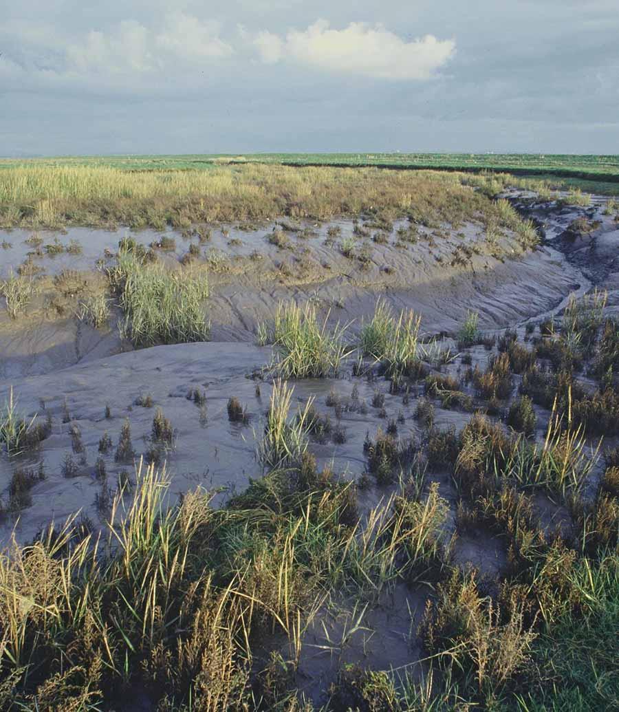 Hesketh Out Marsh, um pântano salgado no noroeste da Inglaterra. Os pesquisadores calcularam que cada hectare vale mais de US $ 2.000 somente em armazenamento de carbono.