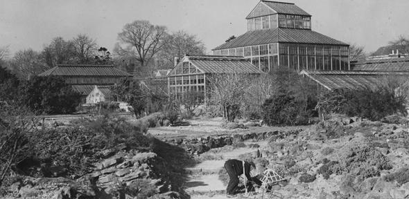 Image result for cambridge university botanic garden history