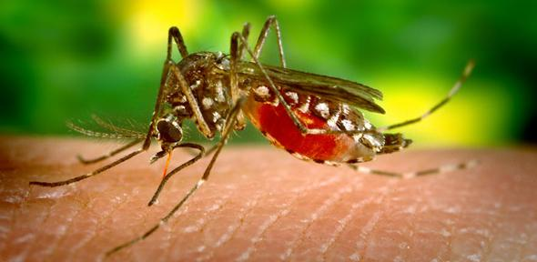 Dengue research papers