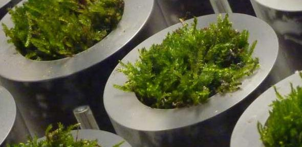 Close-up of the moss pots incorporated into a novel table developed at Cambridge University.