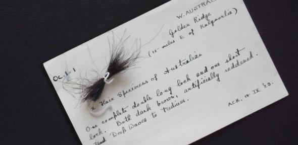 Original card with the lock of hair, written by A C Haddon after returning from Western Australia.