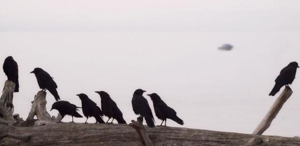 Crow Klatch