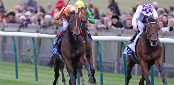 Parish Hall on right (a champion with Northern Dancer ancestry on both sides) wins the Group 1 Dubai Dewhurst Stakes at Newmarket in October 2011 for Jim Bolger