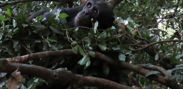 Tree-nesting.