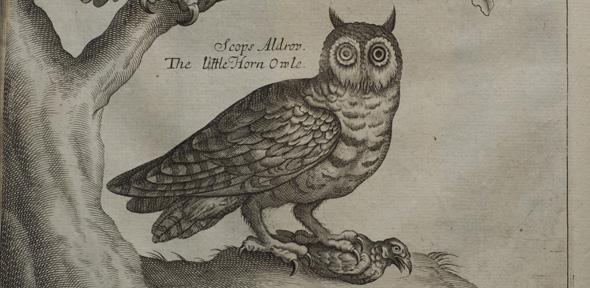Here O Is For Owl The Researchers Using Their Wing Structure To Inspire Aeroacoustic Developments