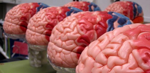 Cambridge team develops technique to \'listen\' to a patient\'s brain ...