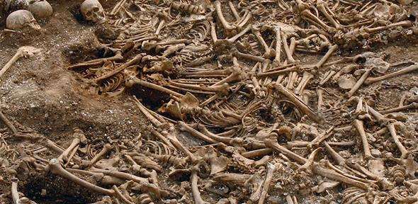 A mass grave of around 50 headlessVikings from a site in Dorset, UK. Some of these remains were used for DNA analysis.