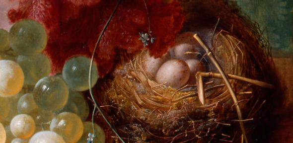 Nest of eggs; detail from 'Flowers and Fruit' (1732) by Jan van Os