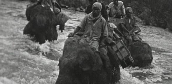Elephants crossing river