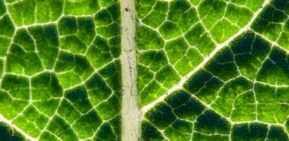 Simply leaf