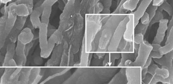 Aligned carbon nanotubes, coated with a conducting polymer