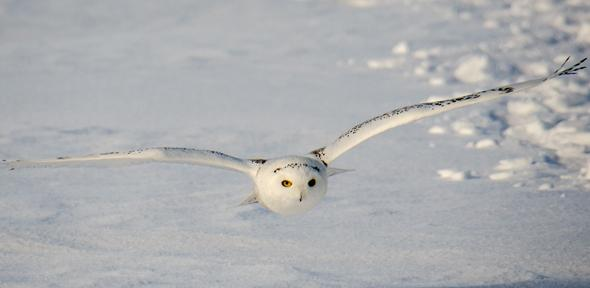 A Newly Designed Material Which Mimics The Wing Structure Of Owls Could Help Make Wind Turbines Computer Fans And Even Planes Much Quieter
