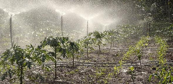 Crops being watered