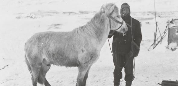 PO Edgar Evans with the pony Snatcher, Cape Evans, October 1911