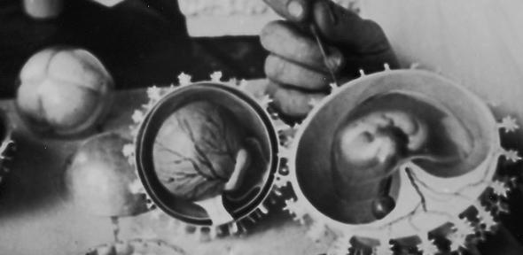 Model embryo making