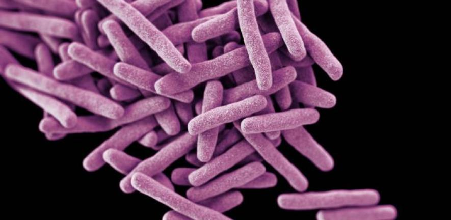 This illustration depicts a three-dimensional (3D) computer-generated image of a cluster of rod-shaped drug-resistant Mycobacterium tuberculosis bacteria, the pathogen responsible for causing the disease tuberculosis (TB). The artistic recreation was based upon scanning electron micrographic imagery.