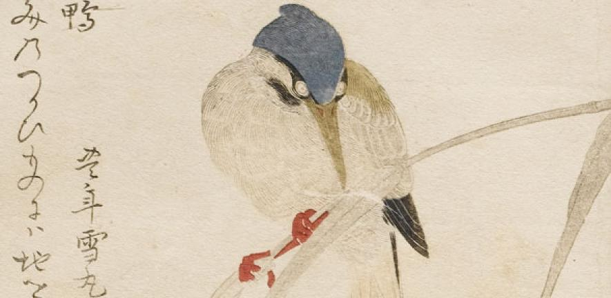 Detail of Kingfisher, woodblock printed in colour, Kitagawa Utamaro