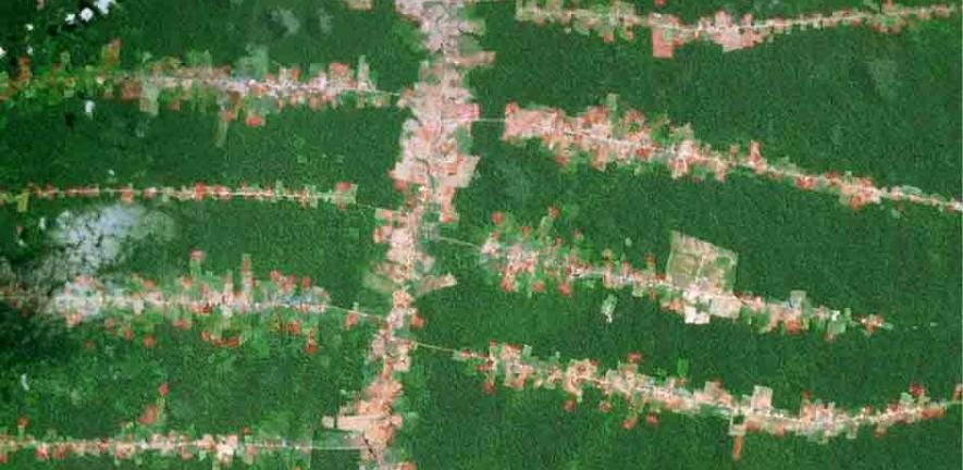 Forest clearing along roads in the southern Brazilian Amazon (in Rondônia)