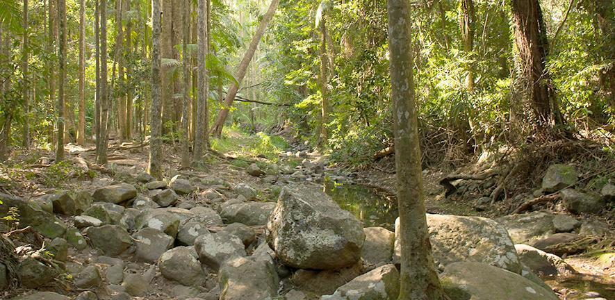 Shallow river bed in Buderim Forest Park, Queensland, Australia. Credit: Laura Bentley