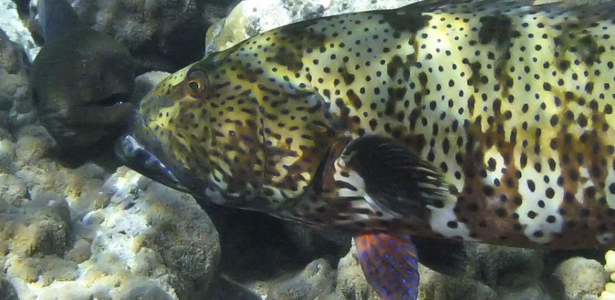 Grouper and moray.