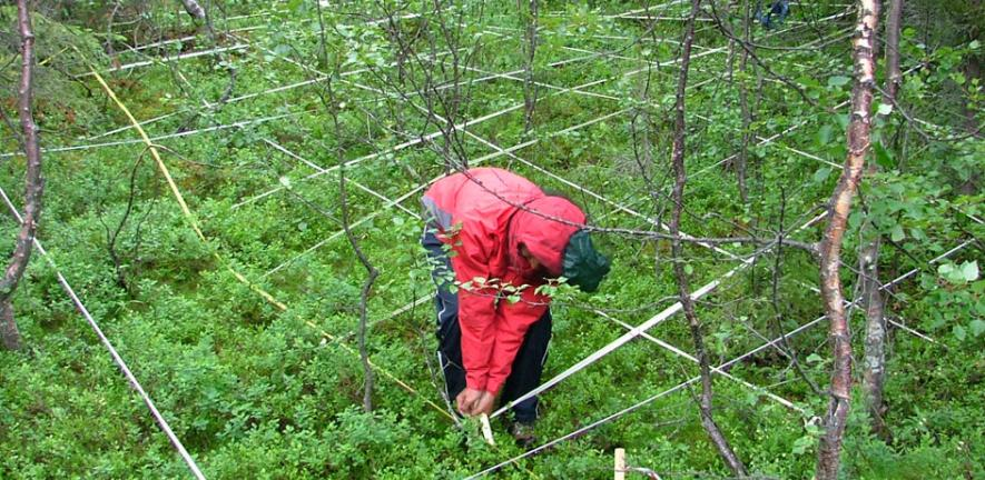 Some of the research being undertaken to measure Arctic tree lines