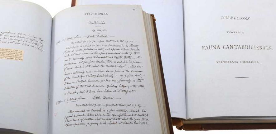 Original manuscript of Fauna Cantabrigiensis