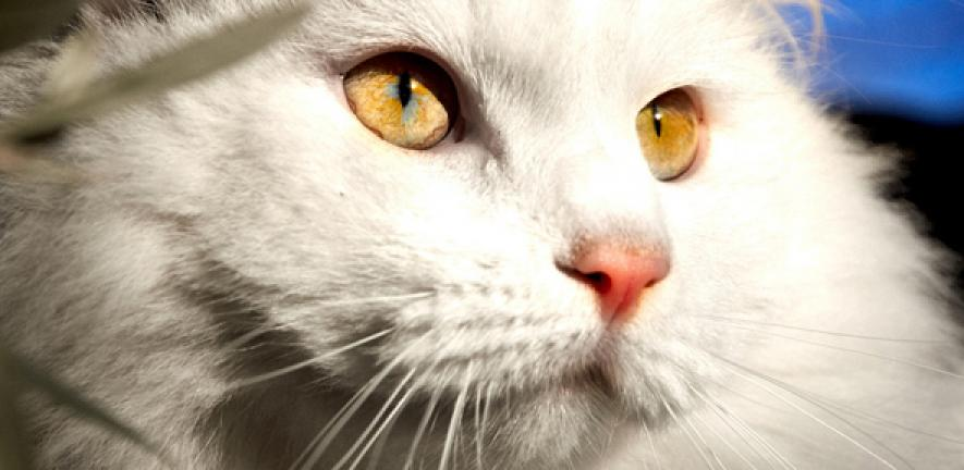 New research reveals how cat dander triggers allergic responses |  University of Cambridge