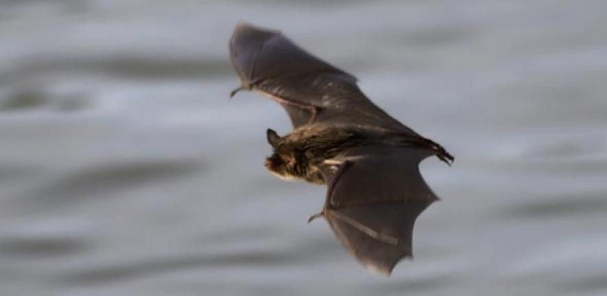 Gest Library Of Bat Sounds Compiled To Track Biodiversity
