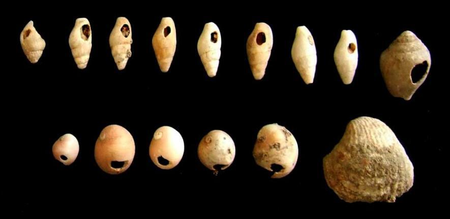 Kharaneh shells