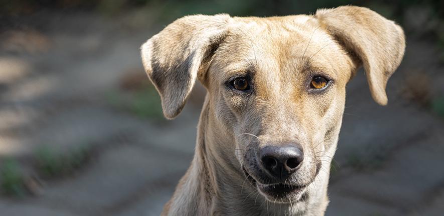 Dog by Syed Ahmad