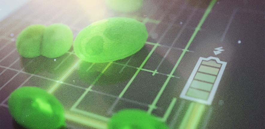 Harnessing the power of algae: new, greener fuel cells move step