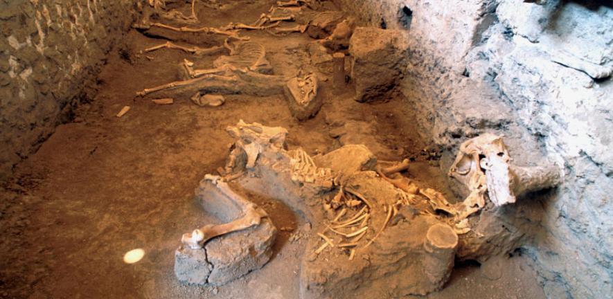 Pompeii's mystery horse