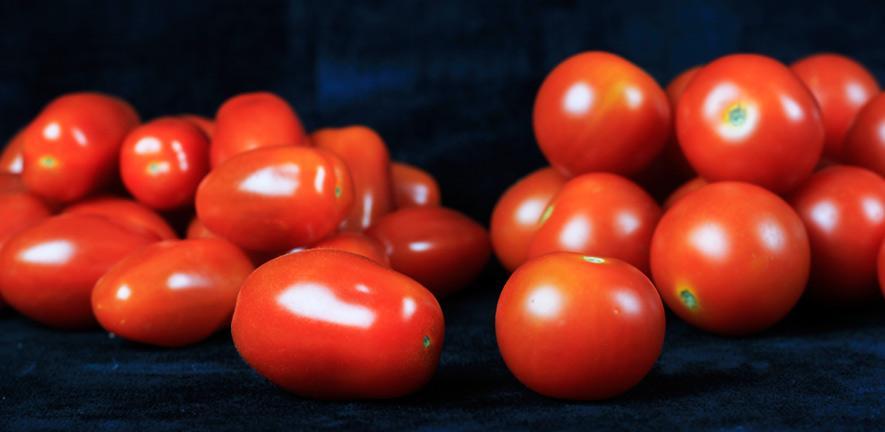 Cherry and baby plum tomatoes