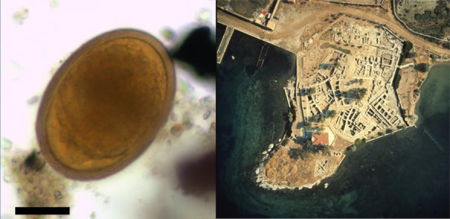 Ancient faeces reveal parasites described in earliest Greek medical