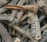 Ancient bat bones