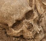 Finds from the mass grave in Dorset.