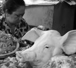 Pigs head at market in Vietnam