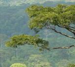 Gola Forest credit Jeremy Lindsell