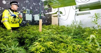 A cannabis setup inside a residential premises in the West Midlands. Image: West Midlands Police.