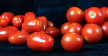 Cherry and baby plum tomatoes